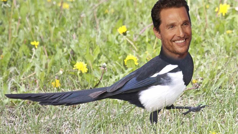Magpie McConaughey